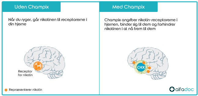 Sådan virker Champix Varenicline